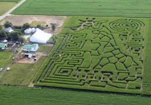 Labirinto em plantação de milho
