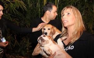 Resgate de beagles em São Roque