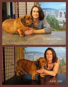 Antes e depois de cachorro obeso fazer dieta