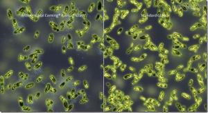 Comparativo de Bactérias com e sem novo Gorilla Glass