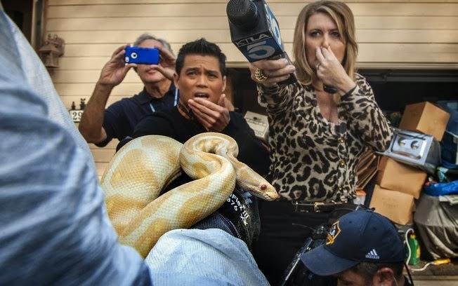 Cobra apreendida em casa de professor primário