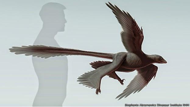 Dinossauro com quatro asas