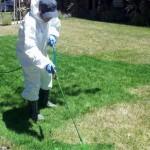Californianos pintam gramados de verde para esconder efeito da seca