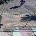 Empresa do RS demite funcionário após câmera flagrar agressão a cachorro
