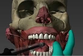 Cabeça digital em 3D 'revoluciona' aprendizado de odontologia e medicina