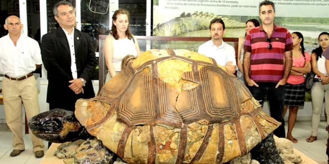 Jabuti gigante viveu na Amazônia há 8 milhões de anos