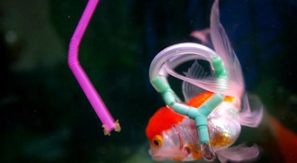 Homem cria colete para salvar vida de peixe de estimação