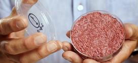 Cientistas criam primeiro hambúrguer feito de células-tronco