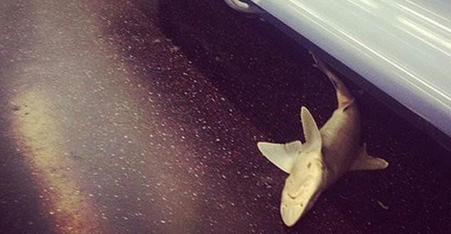 Tubarão morto é encontrado em vagão do metrô de Nova York