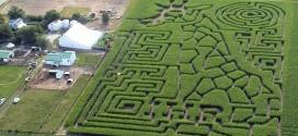 Americano cria labirintos em plantações de milho