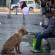 Cachorros abandonados no Chile carregam balões com pedidos de carinho