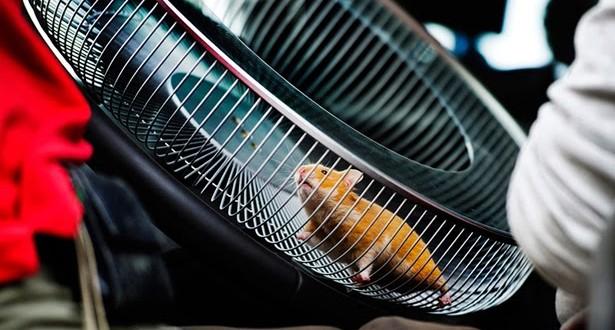 Hamster dirige caminhão para promover sistema de direção da Volvo