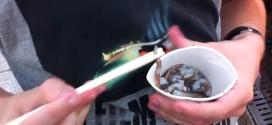 Mercado de peixes na Coreia do Sul serve polvo vivo como iguaria
