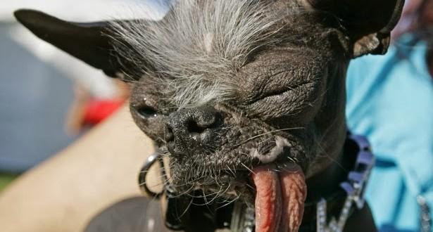 Ex-vencedor do concurso de cachorro mais feio do mundo morre nos EUA aos 8 anos