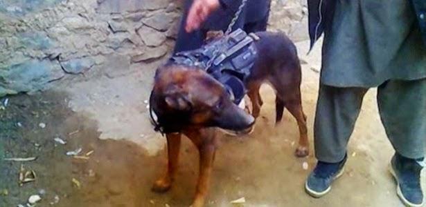 Talebans mantêm cão militar britânico como refém no Afeganistão