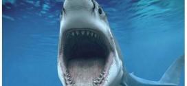Twitter protege surfistas contra ataques de tubarões na Austrália
