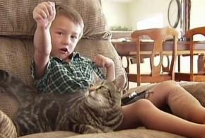 Gata salva criança de ataque de cachorro nos EUA
