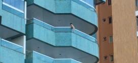 Vídeo flagra criança presa à tela de varanda no 5º andar de prédio