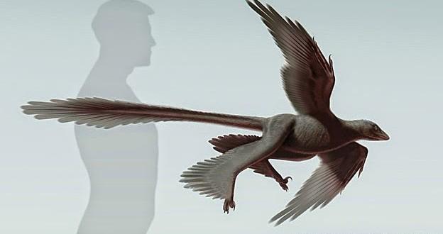 Dinossauro com quatro asas é descoberto na China