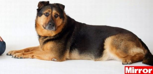 """'Cão mais triste do Reino Unido"""" aguarda por adoção há 5 meses"""