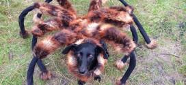 Pegadinha de cão fantasiado de aranha gigante faz sucesso no YouTube