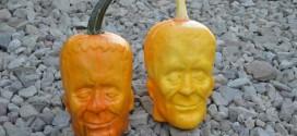 Fazenda cultiva abóboras com o formato do rosto de Frankenstein