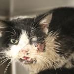 Gato reaparece vivo cinco dias depois de ser enterrado na Flórida