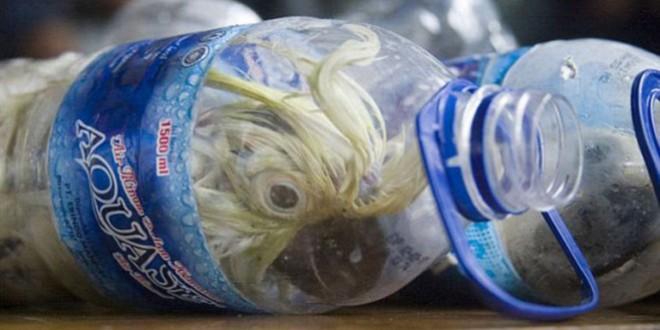 Cacatuas são contrabandeadas em garrafas de água mineral
