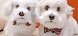 Empresa dos EUA faz 'clones' de pelúcia de cão, gato e até vaca