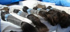 Receita Federal doa quase 250 kg de cabelos apreendidos na fronteira do país