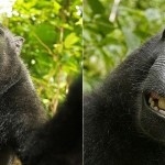 PETA quer que macaco que tirou selfie seja dono dos direitos autorais