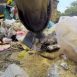Câmera em cachorro mostra dura vida dos animais de rua