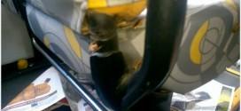 Ônibus do transporte público de SP tem infestação de baratas